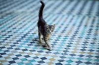 Maroc - Meknes - chat dans la medersa