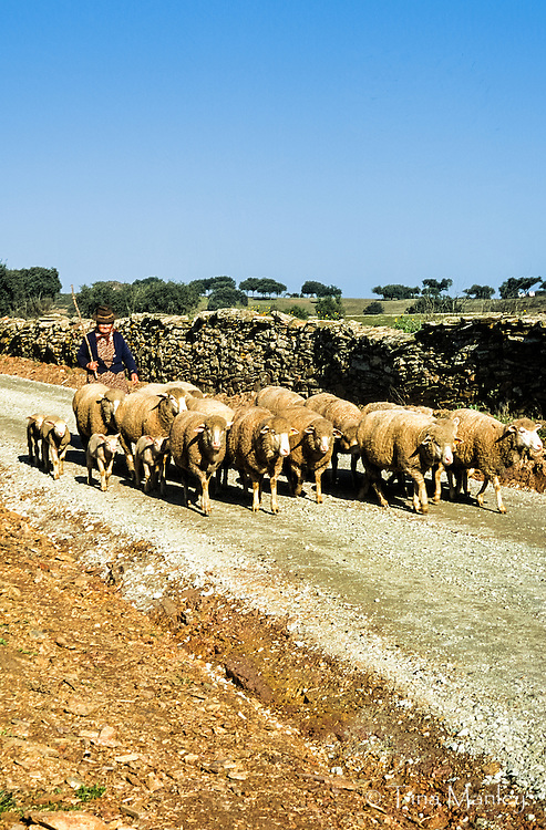Woman sheep-herder takes her flock down a country road in southern Portugal.