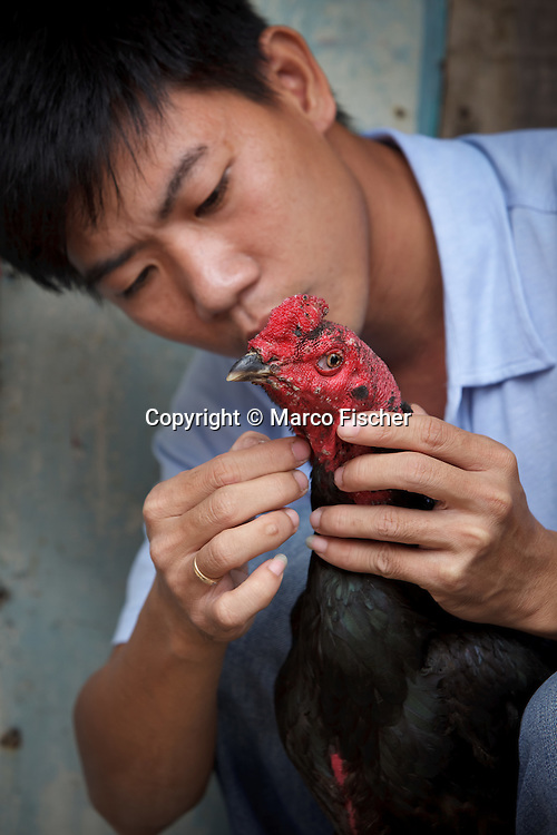 Young man cleaning his fighting cock. Cock fights are very popular in Vietnam.