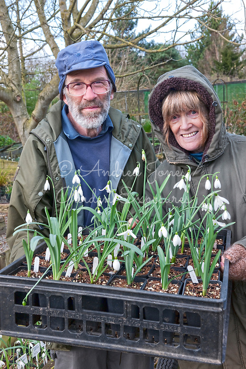 Sue and Roger Norman of Ivycroft Plants with a tray of Galanthus (snowdrop) varieties<br /> <br /> <br /> Ivycroft Plants, Herefordshire, England