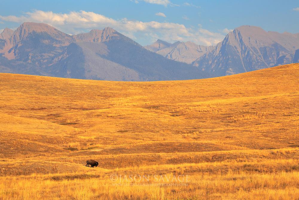 Mission Range rises up as a backdrop on the National Bison Range, Montana.
