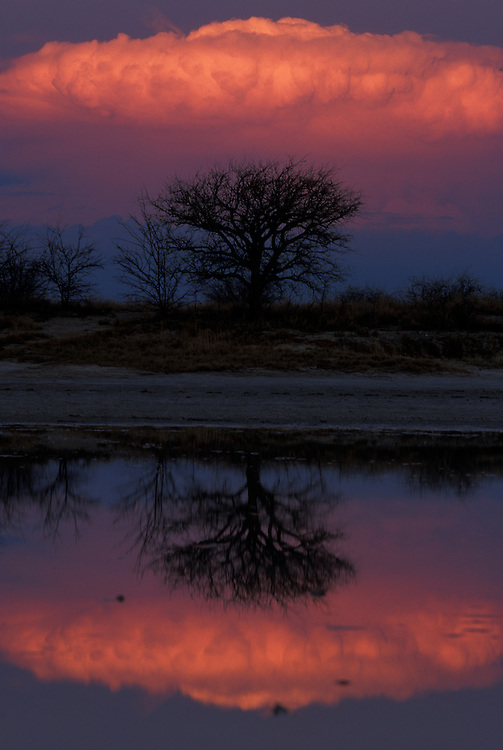 Botswana, Nxai Pan National Park, Setting sun lights storm clouds above Baines Baobabs, reflected in flooded salt pans