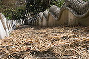 A long and steep stone stairway leading to a beautiful Buddhist temple is covered with dry leaves and straw in Mae Sai (Sae) Thailand.