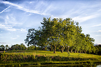 A Sunny day at Broemmelsiek Park as the light peeks through a tree line along the lake shore