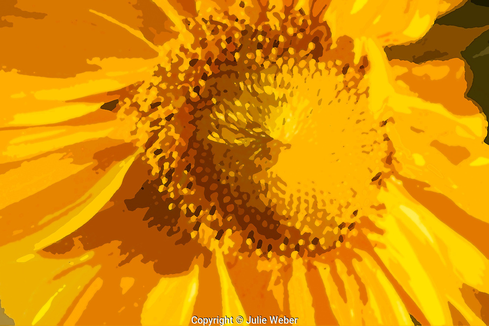 Graphic Rendering of Sunflower