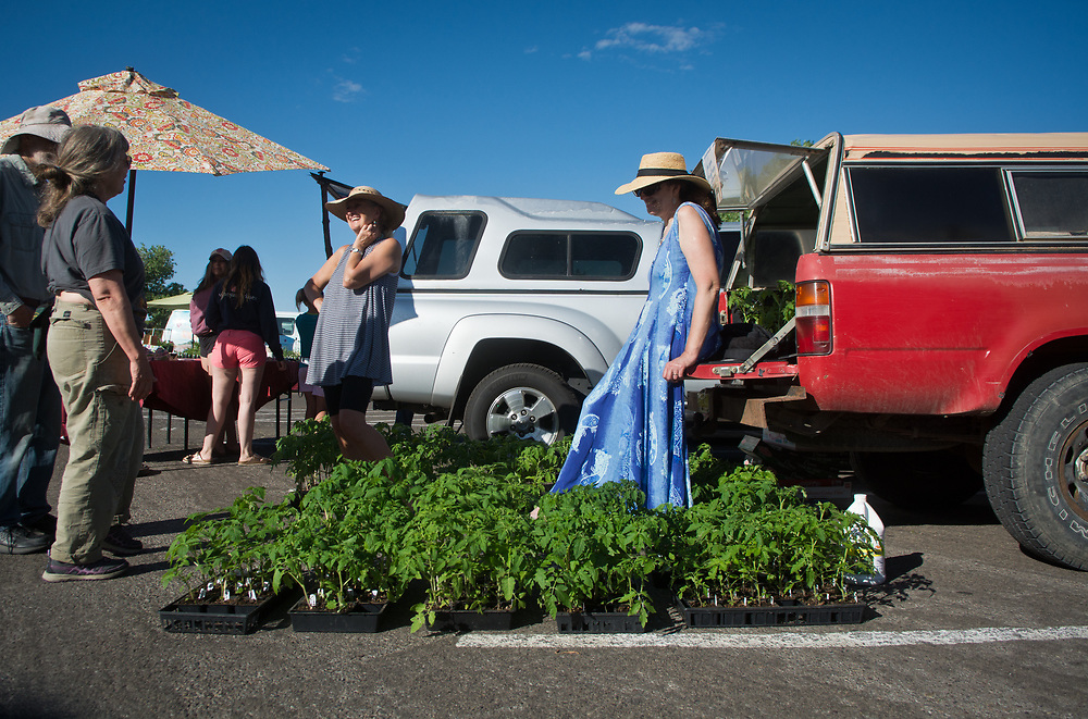 mkb060317f/living/Marla Brose --  Tsiporah Nephesh leans against her friend Mirna Seidel's truck, surrounded by heirloom tomato seedlings for sale at the Los Ranchos Growers' Market, Saturday, June 3, 2017. The market is in its 25th season. (Marla Brose/Albuquerque Journal)