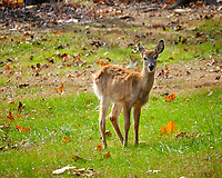 Shaggy cold young Doe. Image taken with a Fuji X-H1 camera and 200 mm f/2 OIS lens + 1.4x teleconverter (ISO 640, 280 mm, f/8, 1/420)