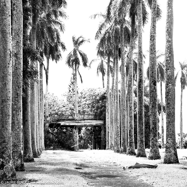 Palm tree lined drive to abandoned house