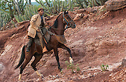 Brazilian 'Vaquiero' Cowboy<br /> Caatinga Habitat<br /> Piaui State, NE BRAZIL.  South America<br /> <br /> Fully leather clad against harsh spines of Caatinga Vegetation.