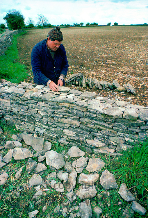 Man building a dry stone wall using Cotswolds stones and traditional skills (without using cement)  in the Cotswolds, England