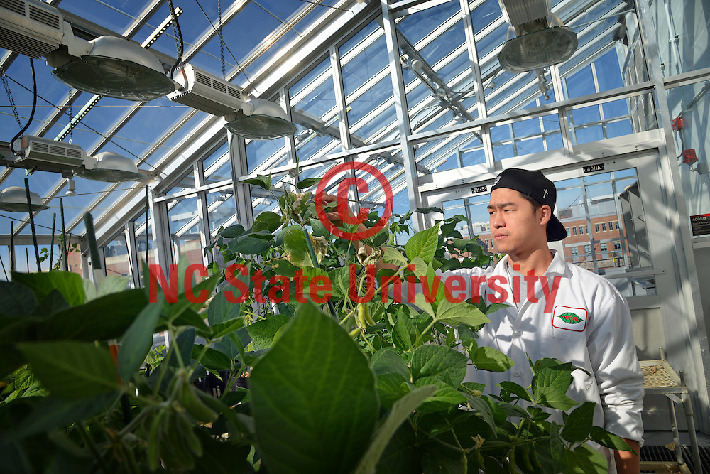 Student conducts research in the Phytotron greenhouse.