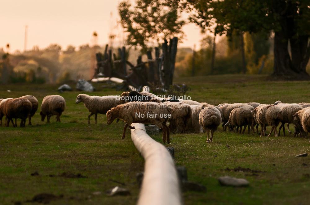 Azerbaïdjan, piline dans campagne region of Sheky // Azerbaidjan, pipeline in country side region of Shaky