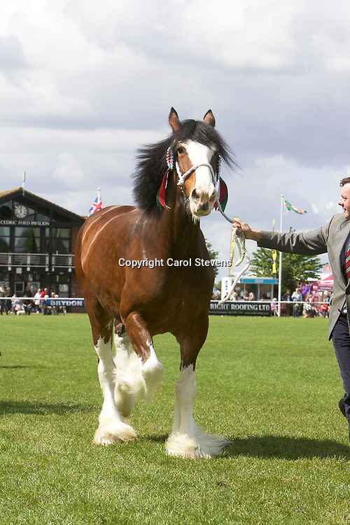 J W &amp; M McIntyre's WEBERS SADIE JAKEY VICTORIA<br />