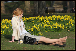 An office worker enjoys the spring like weather amongst the daffodils in St.James's Park  in London Thursday, 1st March 2012.  Photo by : Stephen Lock