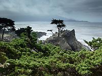 Lone Cypress Tree, 17 Mile Drive, Pacific Grove, California