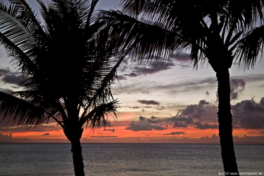 Silhouette of palm tree with cloudy sky at twilight, Maui, Hawaii