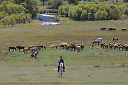 TERELJ, MONGOLIA..09/04/2001.Horses in landscape..(Photo by Heimo Aga)