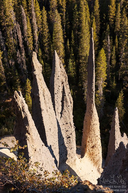 These tall, narrow pillars known as The Pinnacles were formed during the cataclysmic eruption of Mount Mazama, which formed Crater Lake, Oregon. Volcanic gasses rose through layers of dacite pumice and andesite scoria in vents known as fumaroles. With temperatures of 750 degrees Fahrenheit (400 Celsius), the hot gasses welded the sides of the fumaroles. After erosion carried away the rest of the pumice and scoria, these hardened fossil fumaroles were all that remained.