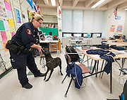 Office Stephanie Clinton works with Sasha to check classrooms with Sergeant Alfonso Barbosa at Sharpstown International School, May 15, 2014.