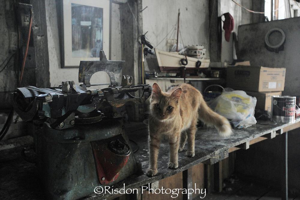 orange cat in dark dirty shop