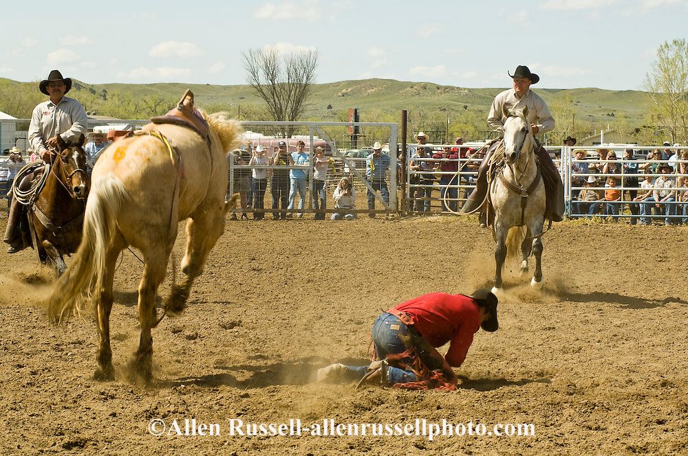 Rodeo, Saddle Bronc rider bucked off, Miles City Bucking Horse Sale, Montana, <br /> MODEL RELEASED on rider &amp; pickup men