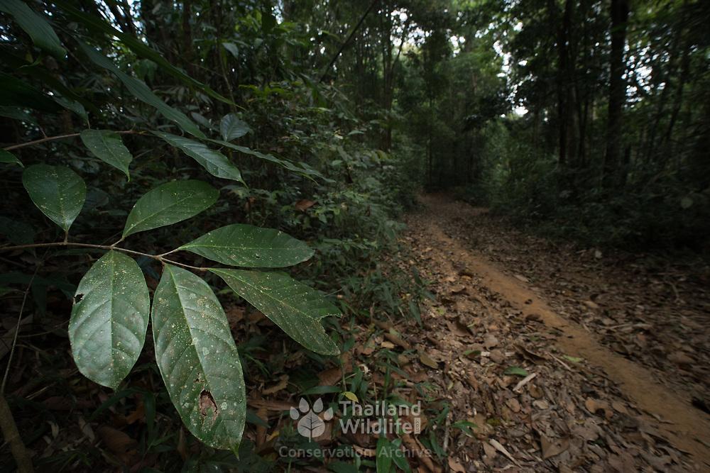 Trail in Evergreen Forest in Kaeng Krachan national park, Thailand