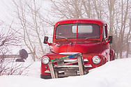 Vintage 1950s Red Truck in Snow and Fog, Alberta Canada