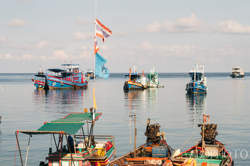 Koh Tao Turtle island in Thailand