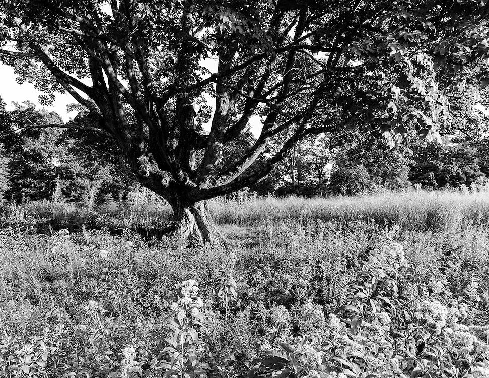 Lost, a series of black and white images of wandering around.