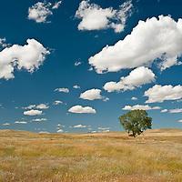 missouri river country, montana, usa, summer, montana high plains, eastern montana