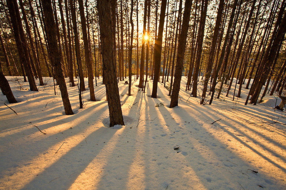 Beautiful Shadows cast by trees during sunset in winter at Algonquin Provincial Park, Ontario, Canada