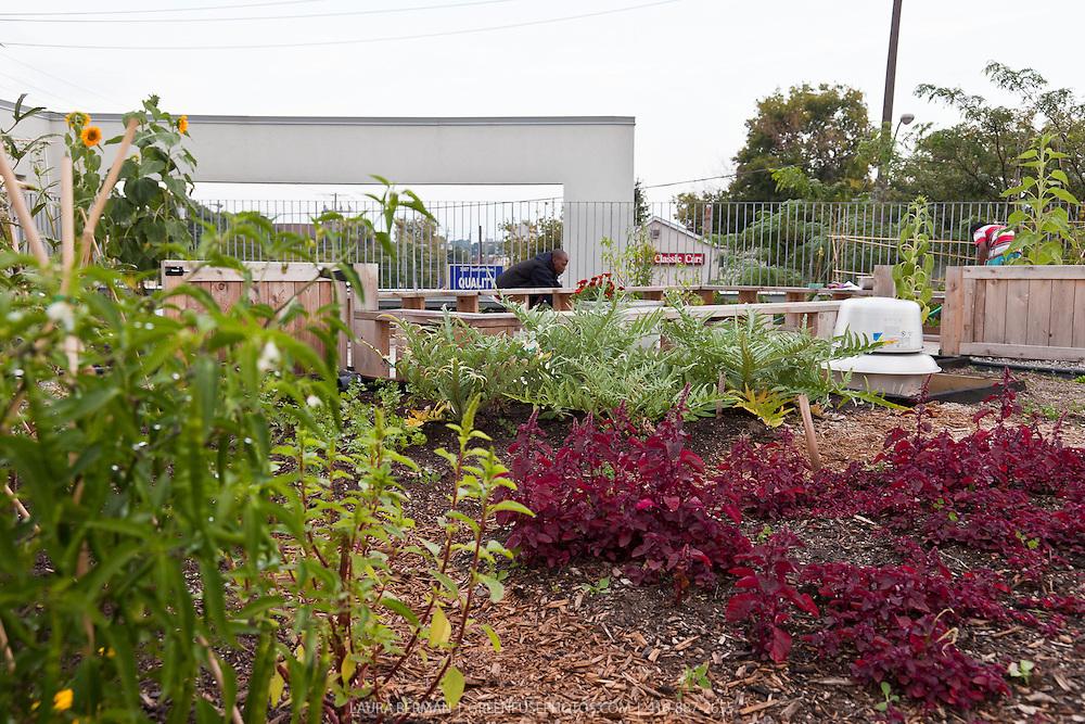 Access Alliance rooftop garden