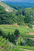 Weinberge, Radebeul, Sachsen, Deutschland.|.vineyards, Radebeul, Dresden, Saxony, Germany.