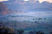 Cuba, Province de Pinar del Rio, Vallee de Vinales // Cuba, Region of Pinar del Rio, Valley of Vinales