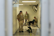 (Gabe Green | The Daily World)<br /> <br /> Stafford Creek inmates wait in a hallway with their dogs before the start of Wednesday&rsquo;s Freedom Tails adoption ceremony.