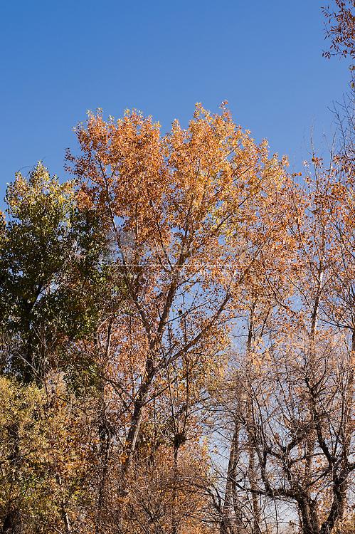Denver Botanic Gardens at Chatfield