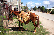 Horse with saddlebags in Velasco, Holguin, Cuba.