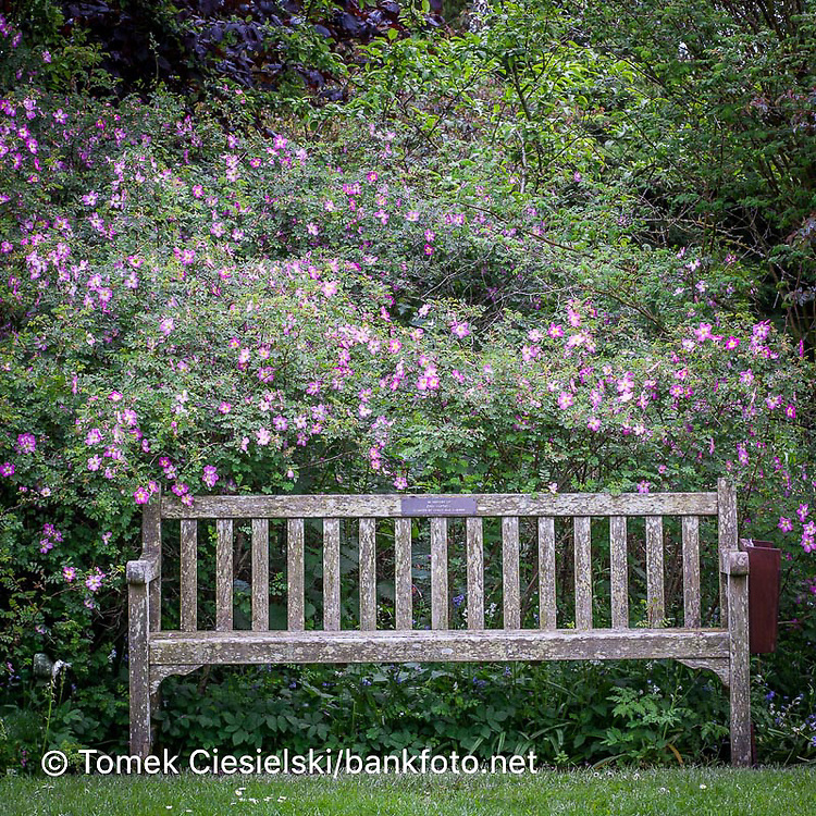 Wooden bench on on flower background