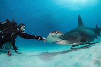 Jamin Martinelli feeds a Great Hammerhead Shark<br /> <br /> Shot in Bimini, Bahamas