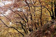 Europe, Germany, North Rhine-Westphalia, autumn in a forest at the Ruhrhoehenweg in the Ardey mountains near Wetter...Europa, Deutschland, Nordrhein-Westfalen, Herbst im Wald am Ruhrhoehenweg im Ardeygebirge bei Wetter an der Ruhr.