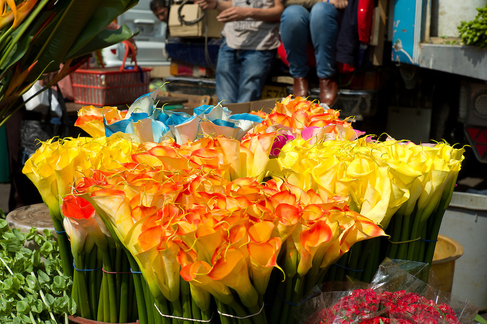 Dyed calla lilies at the Paloquemao Market in Bogotá, Colombia.