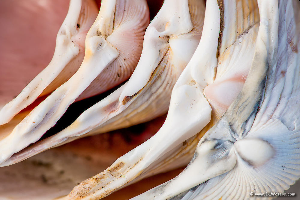 Cose up photograph of a stack of scallop shells collected on Kitty Hawk beach Outer Banks North Carolina.
