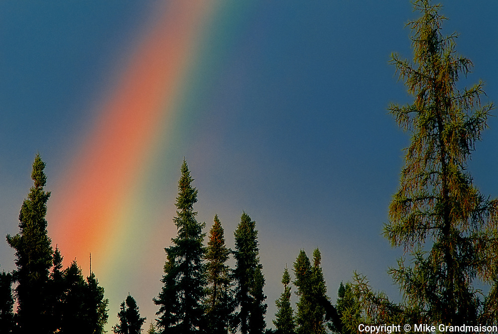 Rainbow over boreal forest<br />
