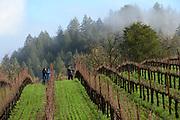Elhers winery & estate vineyard, Napa, California