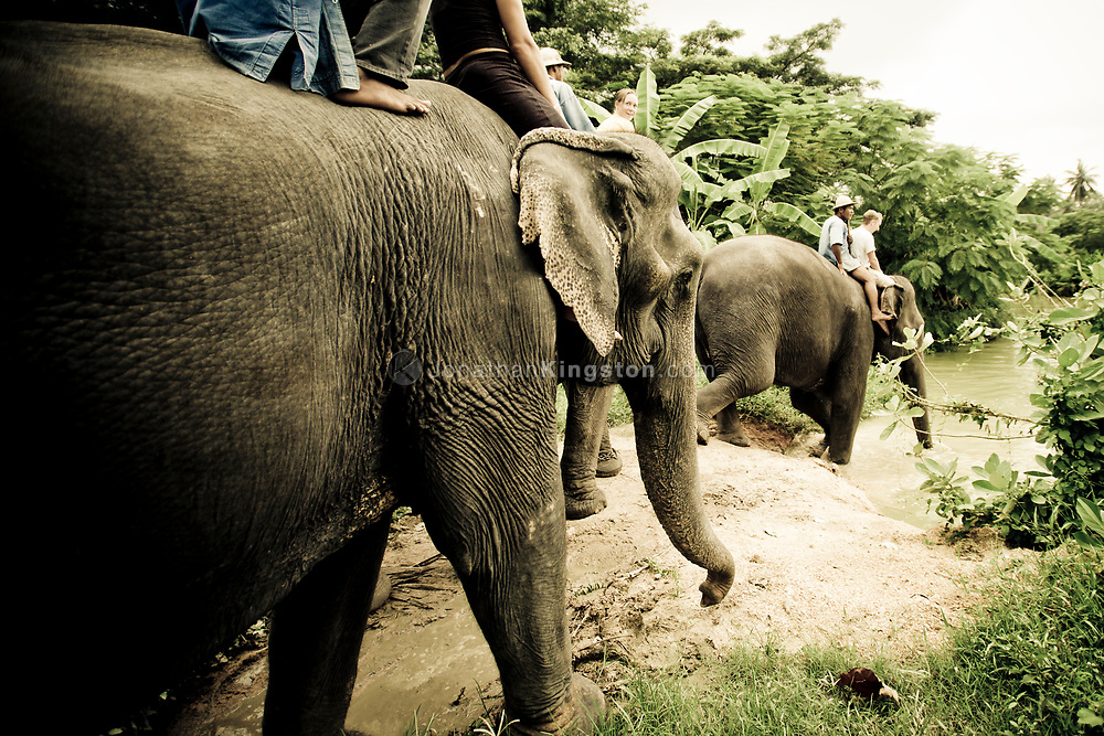 Tourists and mahouts ride on top of elephants as they go walk towards a river for a bath in the Pattaya Elephant Village, Thailand.   The village was opened in 1973 as a sanctuary for former working elephants that can no longer be used for extended heavy work due to injury or ill health.  A popular tourist attraction, fees paid by tourists support the upkeep of the elephants.