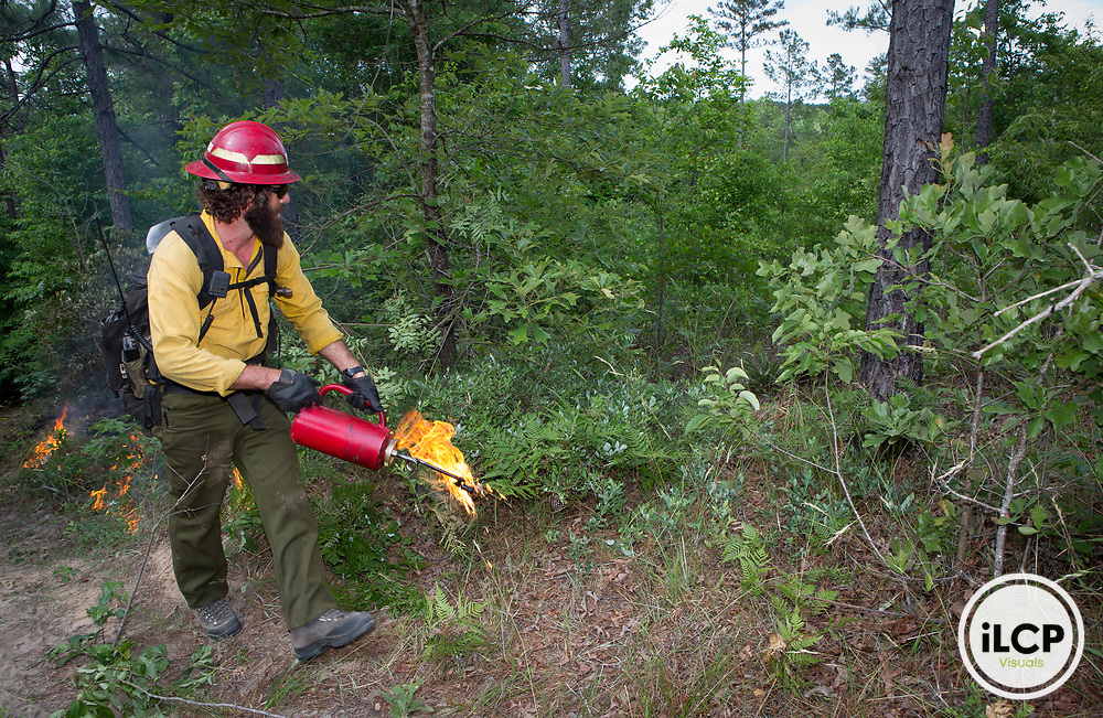 TNC fire manager Geoff Sorrell starts a test fire on TNC property in Georgia. This property is Fort Benning buffer land managed by TNC.