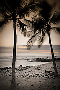 Coconut palms and surf at dusk, Kailua-Kona, Hawaii