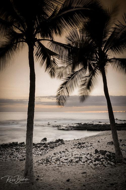Coconut palms and surf at dusk, Kailua-Kona, Hawaii