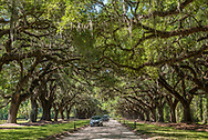 The Avenue of Oaks at Boone Hall Plantation.