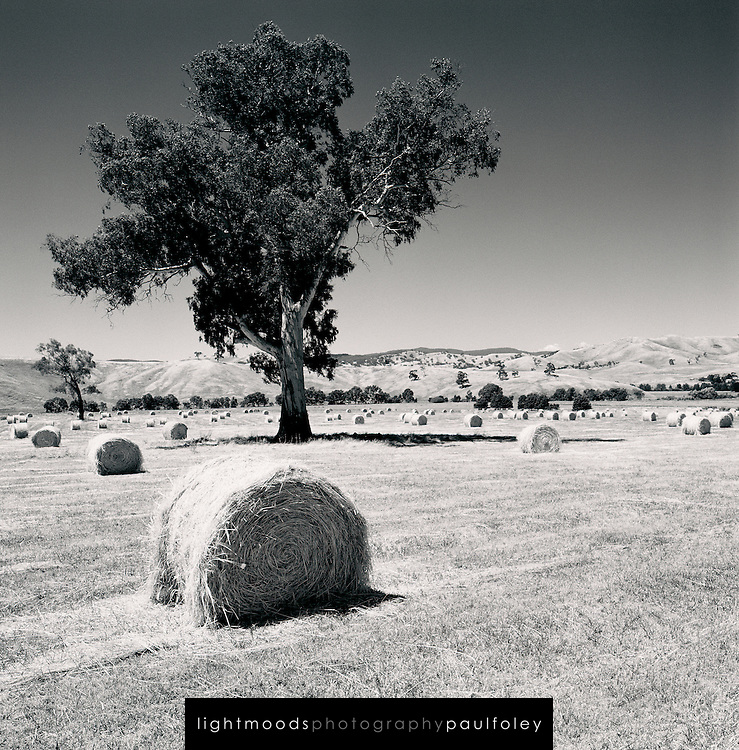 Hay bales and tree in country Victoria - Australia - Maroondah Highway Woodfield